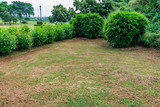 A corner view of small Bamboo tree leafs shrubs & hibiscus tree shrubs in garden with cloudy atmosphere. © Mayank