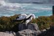 Leinwandbild Motiv Nazcatölpel- Galapagos