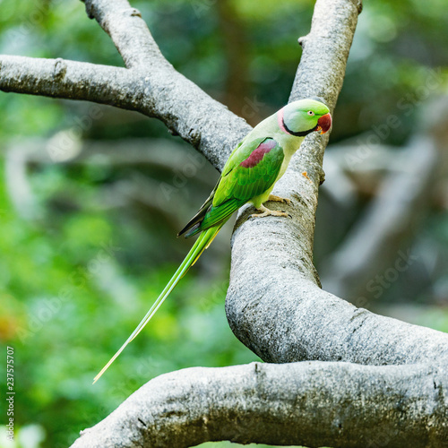 Parrot on the tree branch in the tropical forest.