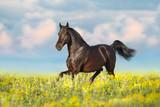 Bay horse trotting on flower spring  meadow © kwadrat70
