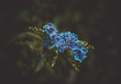 Quadro Blue Flower