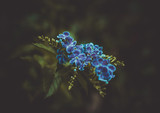 Blue Flower © Adam