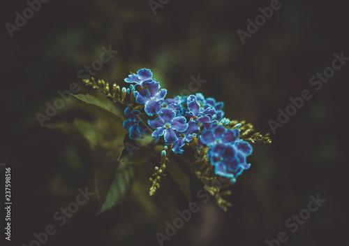 Blue Flower - 237598516