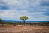 einsamer Baum im Krüger Nationalpark in Südafrika