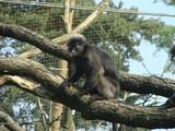 Monkey - 237652108