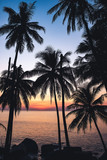 beautiful view of the sea through the palm trees at sunset - 237669758