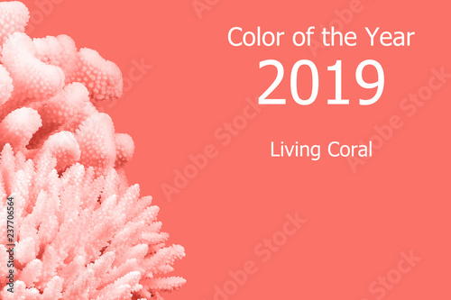 Living Coral color of the Year 2019. Trendy color. - 237706564