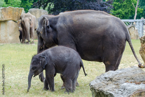 Plakat elephants in the zoo
