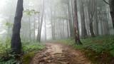 Mglisty poranek w lesie