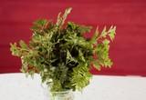 bouquet de persil vert dans un verre - 237745541