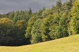 Fototapeta  - Krajobraz © Rafa