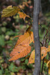 Small tree trunk with bright golden yellow leaves
