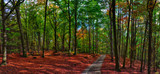 Beech trees forest/woodland with gravel road at autumn afternoon daylight - 237795197