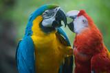 Perroquets mâle et femelle