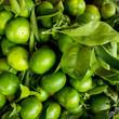 Quadro Green Mandarins. Unripe green oranges