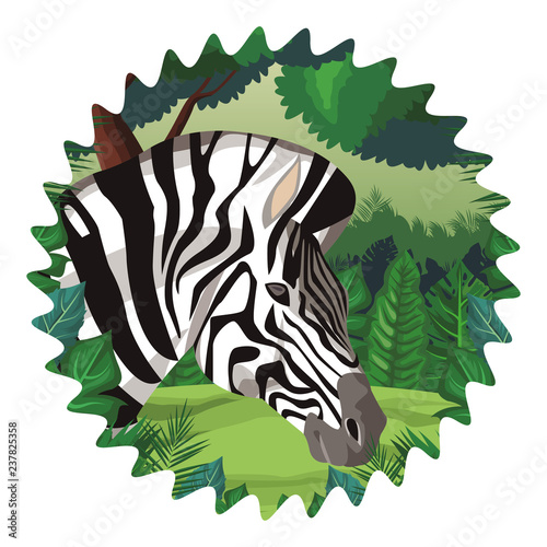 Naklejka Zebra wild animal