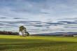 Leinwanddruck Bild - Baum im Feld im Burgenland (A)