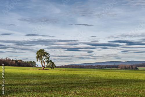 Leinwanddruck Bild Baum im Feld im Burgenland (A)