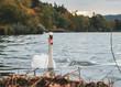 Leinwandbild Motiv Schwan im herbstlichen See