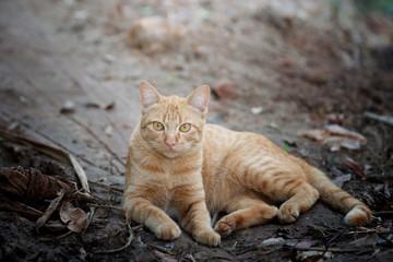 Cute cat looking camera