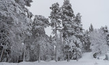 Covered trees with snow.