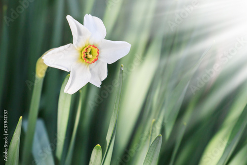 White Easter Flowers In Sunshine Space For Text Buy Photos Ap
