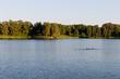 Leinwandbild Motiv Jungschwäne auf einem See