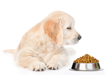 Golden retriever puppy sniffing dry dog food. isolated on white background © Ermolaev Alexandr