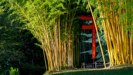 Bamboo forest in the Anduze bamboo plantation © yvon52