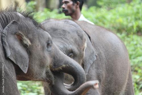 Plakat elephant Babies
