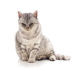 Beautiful cute cat.