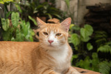 The cat in the garden is looking up. - 238032974