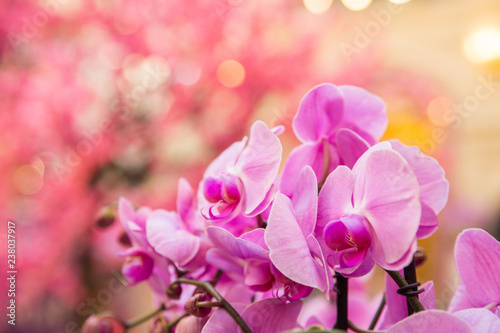 Pink orchids. Celebration of international woman's day