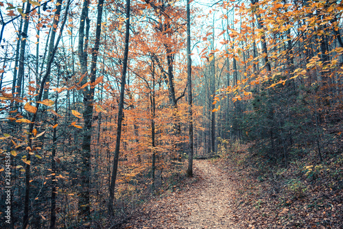 Nature Trail in North Carolina in the Fall - 238041536