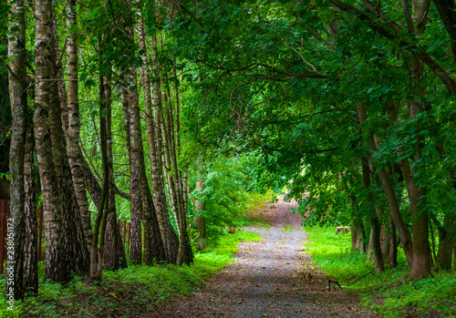 Beautiful shady road in the park - 238051173