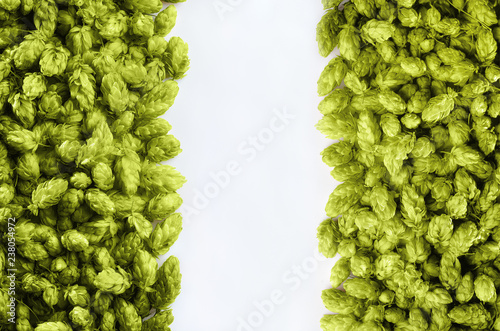 Beer template  with two rows of hops on a white background.