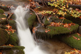 Mountain stream in autumn