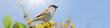 Leinwanddruck Bild - Vögel 101