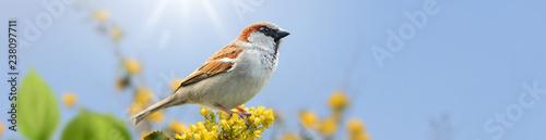 Leinwanddruck Bild Vögel 101