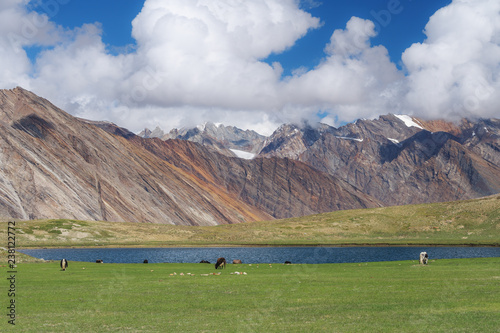 Nature landscape, cows grazing grass in pasture with lake and mountain on India highland