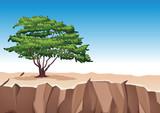 Tree on stone mountain