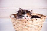 little kitty in a wicker basket on a white wooden background - 238146363