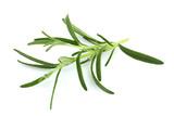 Branch of rosemary closeup. - 238162761