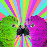Minimal Contemporary collage art. Colorful parrots. Life is colorful concept - 238163329
