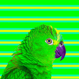 Minimal Contemporary collage art. Green parrots. Life is colorful concept - 238163345