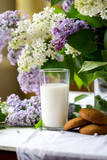 Morning. Spring season. Mood. Flowering lilac. A glass of cow's milk and oatmeal cookies. - 238164959