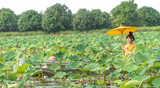 Beautiful asia women wearing traditional Thai dress and sitting on wooden boat with yellow paper umbrella in flower lotus lake. Her hands are holding a umbrella . And her face is be happy and smile.