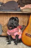 Dog in a sweater. Black, cardigan.