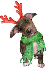 puppy Pitbull in Christmas costume,reindeer antlers and scarf .illustration watercolor © mitrushova