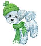 dog in hat and scarf,Christmas watercolour illustration